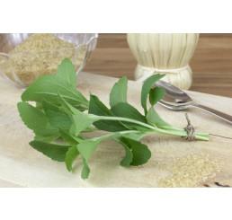 Stevia rebaudiana ´Improved Compact´ / Stévia cukrová, bal. 3 ks, 3x K7