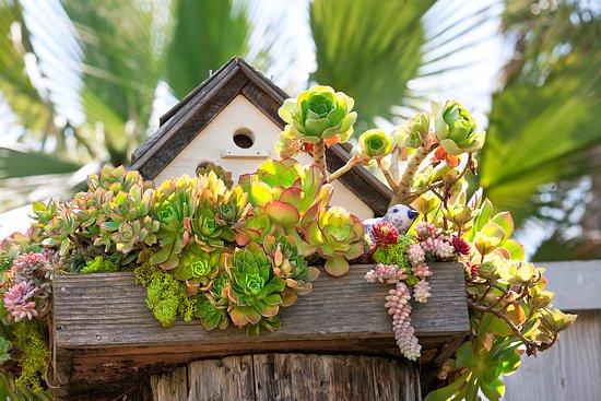 Vtáčie búdky a potrava pre vtáky