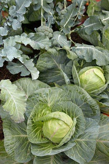 Zelenina dokáže rásť aj v tieni