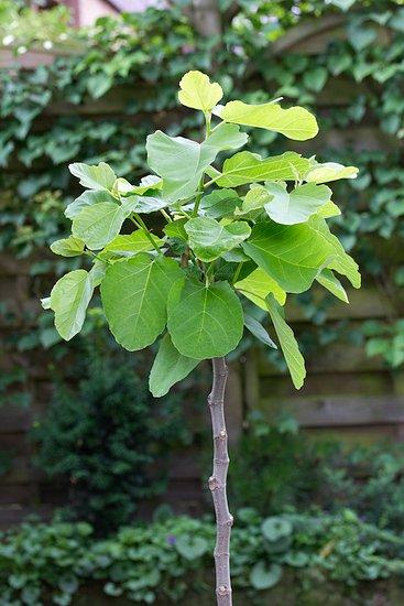 Alternatívne pestovanie ovocných stromov a krov v okrasnej záhrade
