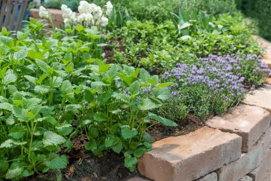 Záhrada v júni