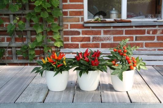 Balkón pre potešenie - vzácna zelenina z kvetináča