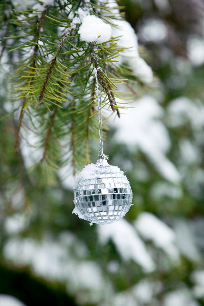 Vianočný stromček v záhrade