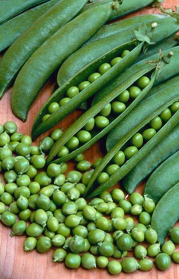 Zelenina na záhrade a starostlivosť o ňu