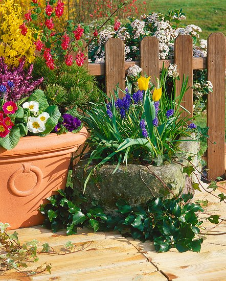 Marcová záhrada