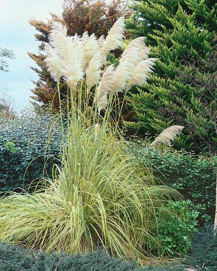 Okrasné trávy - dominanty záhrady