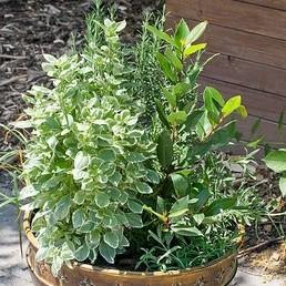 Liečivé a aromatické rastliny
