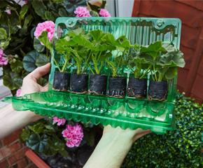 Prepravný obal s mladými rastlinami v sadbovačoch