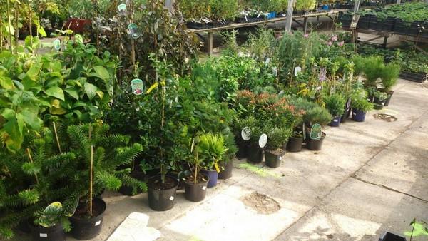 Rastliny v záhradnom centre
