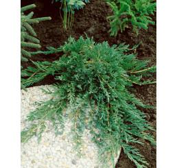 Juniperus horizontalis ´Wiltonii´ / Borievka , 15 - 20 cm, K9