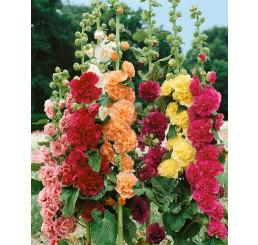 Alcea rosea / Topoľovka r. plnokvetá ´ZMES´, bal. 0,7 g