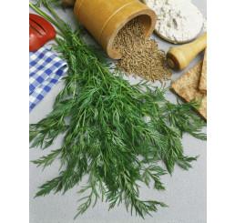 Carum carvi ´PROCHAN´ / Rasca, bal. 2 g