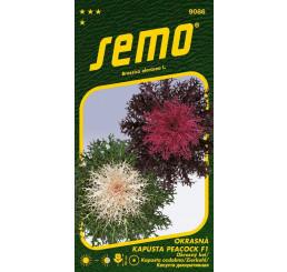Brassica oleracea / Kel okrasný ´PEACOCK F1 MIX´, bal. 20 s.