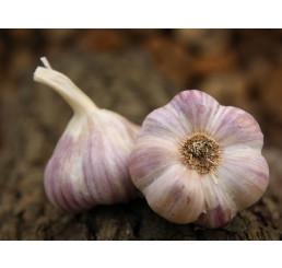 Allium sativum ´Anton´ / Kuchynský cesnak na výsadbu, bal. 3 hlavičiek, 125 g