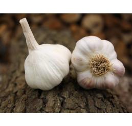 Allium sativum ´Benátčan´ / Kuchynský cesnak na výsadbu, bal. 3 hlavičiek, 125 g