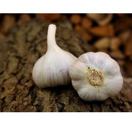 Allium sativum ´Bjetin´ / Kuchynský cesnak na výsadbu, bal. 3 hlavičiek, 125 g