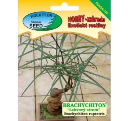 Brachychiton rupestris / Brachychiton ´Fľaškový strom´- bonsai tip, bal. 5 s.