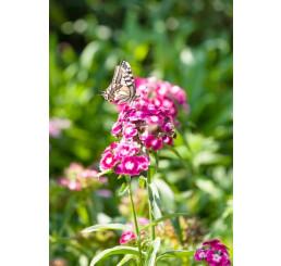 Kvetinová lúka, osivo pre motýle / Nektár party, bal. 20 g