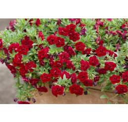 Calibrachoa Sweet Bells® ´Double Red´ / Minipetúnia, K7