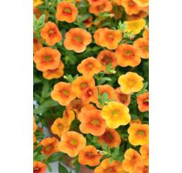 Calibrachoa Calita® Petite Orange´/ Mnohokvetá petúnia, bal. 6 ks sadbovačov