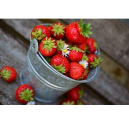 Čerstvé jahody, kg