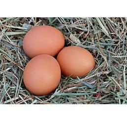 Domáce slepačie vajcia, veľkosť M, plato 30 ks