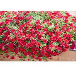 Calibrachoa ´Celebration® Granada Red´ / Mnohokvetá petúnia, bal. 6 ks sadbovačov