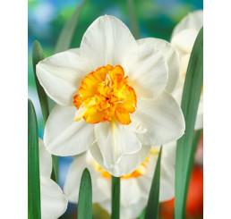 Narcis ´Flower Drift´, bal. 5 ks, 12/14