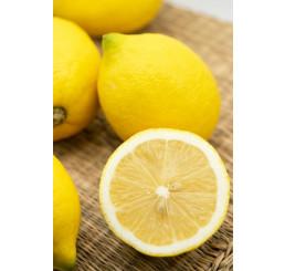 Citrus limon ´Genoa´ / Citrónovník, 25-40 cm, C2
