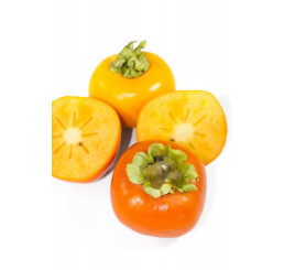 Diospyros kaki ´Cangzhou´ / Hurmi  kaki / Ebenovník rajčiakový , 80-100 cm, C5