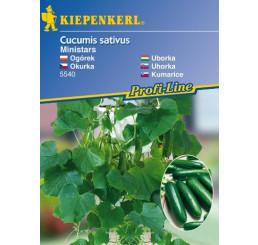 Uhorka šalátová Ministars (balkónová), prirodzene rezistentná, štepená rastlina, K12