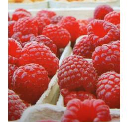 Rubus idaeus ´Pokusa´ / Malina červená, krík, K9