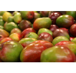 Mango, 500+g, bal. 2 ks