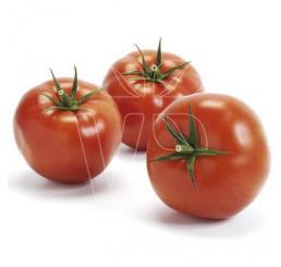 Rajčiny Imagine ® Maxi Red F1, prirodzene rezistentné, štepená rastlina, K12