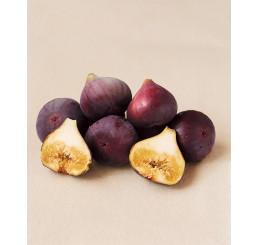 Ficus carica ´Brown Turkey´ / Čiernoplodý figovník, C2