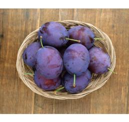 Prunus domestica ´Stanley´ / Slivka jesenná veľkoplodá, myr.