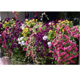Kolekcia 12 rastlín do hrantov, bal. 12x K7