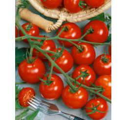 Rajčiny cherry Picolino F1, prirodzene rezistentné, štepená rastlina, K12