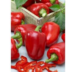 Paprika červená, kg