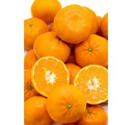 Pomaranče džúsové, kg