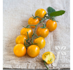 Rajčiny Solena® Yellow F1, prirodzene rezistentné , štepená rastlina, K12