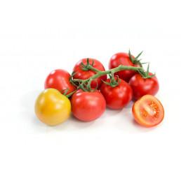 Rajčiny ´Campos® F1´, prirodzene rezistentné, štepená rastlina, K12