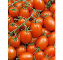Rajčiny cherry ´Mirado®Orange´ prirodzene rezistentné, štepená rastlina, K12