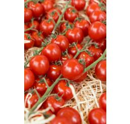 Rajčiny cherry ´Sanvitos®F1´, prirodzene rezistentné, štepená rastlina, K12