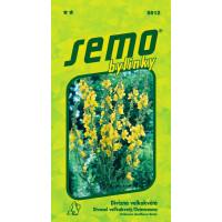 Verbascum densiflorum / Divozel veľkokvetý, bal. 0,1 g