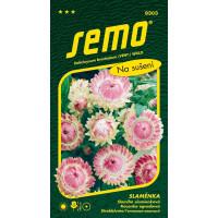 Helichrysum bracteatum / Slamiha slamienková RUŽOVÁ veľkokvetá, bal. 0,4 g