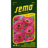 Helipterum roseum Benth. / Slamihovka ružová GOLIATH, 0,5 g