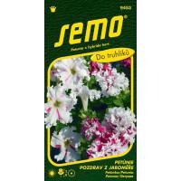Petunia hybrida / Petúnka mnohokv. ´POZDRAV Z JAROMĚŘE´, bal. 50 tabl.