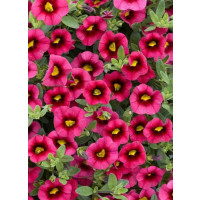Calibrachoa Sweet Bells® ´Cherry Red Morn´ / Minipetúnia, K7