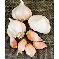 Allium sativum ´LUKAN´ / Kuchynský cesnak na výsadbu, bal. 3 hlavičiek